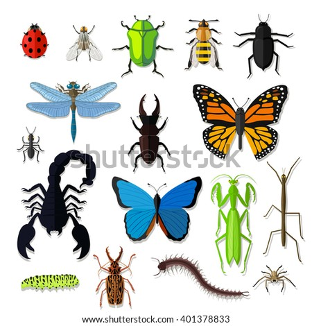 Set of various insects design flat. Bug and butterfly, ant and bee, spider and fly, ladybug and dragonfly, grasshopper wildlife, creature cockroach isolated on white background. Vector illustration - stock vector