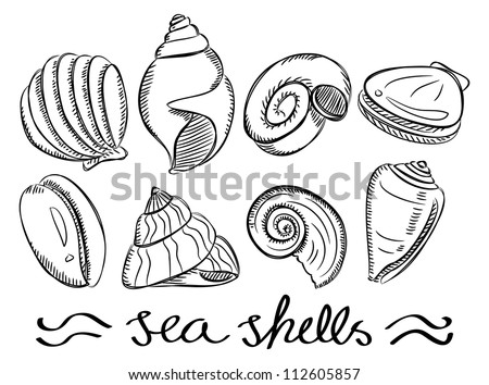 set of various sea shells in doodle style - stock vector