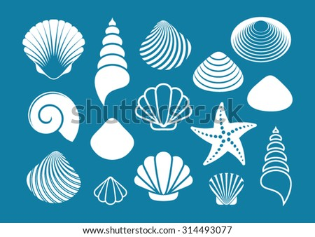 Set of various white sea shells and starfish - stock vector