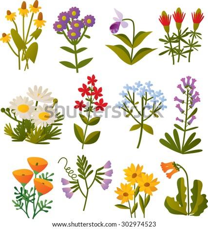 set of vector cartoon north american wild flowers - stock vector