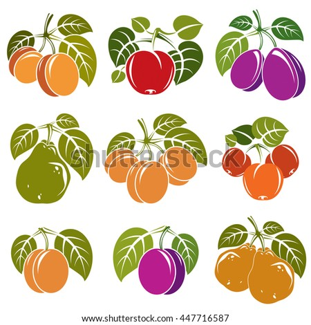 Set of vector ripe fruits and berries with green leaves, fruity trees design elements isolated on white background. - stock vector