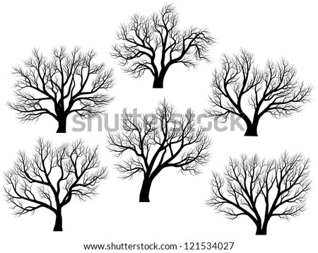 Set of vector silhouettes of deciduous large trees without leaves during the winter or spring period. - stock vector