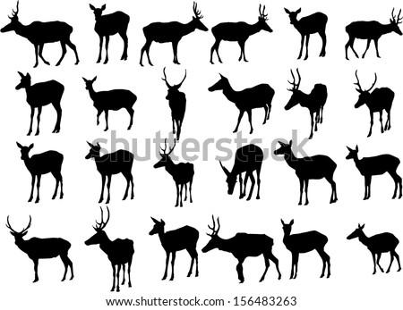 Set of 24 vector silhouettes of deer - stock vector