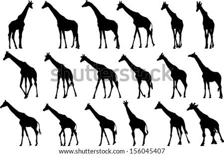 Set of vector silhouettes of giraffes - stock vector