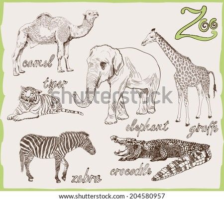 set of vector sketches of animals that can be seen both in the zoo and in the wild - stock vector
