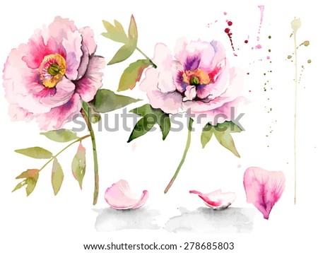 Set of watercolor floral design elements. Beautiful peonies on white background. Vector hand drawn design illustration. - stock vector