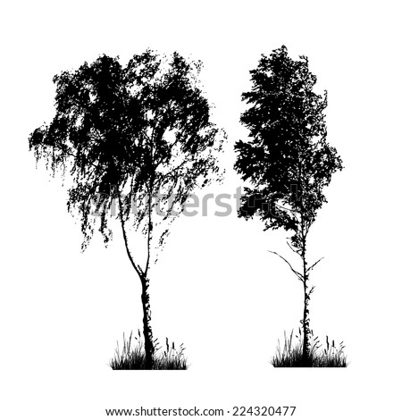 set Silhouette of birch trees on a white background. Vector - stock vector