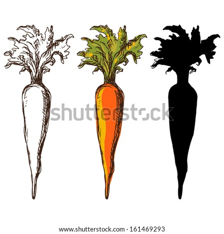 Set sketch carrots isolated - vector - stock vector