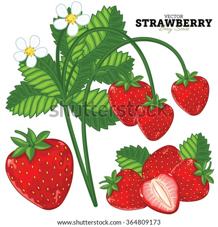 Set Strawberry Compositions, Strawberry Leaves, Strawberry Vector, Cartoon illustration of Strawberry. Strawberry Isolated on White Background. Bunch of Juicy Strawberry Berries. - stock vector
