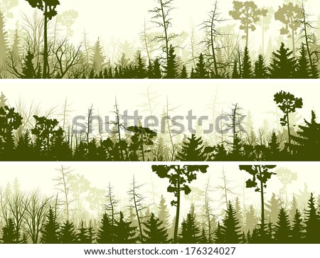 Set vector horizontal banners of coniferous treetops forest (pine, spruce, cedar). - stock vector