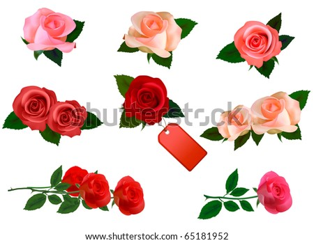 Set with a beautiful roses. Photo-realistic vector. - stock vector