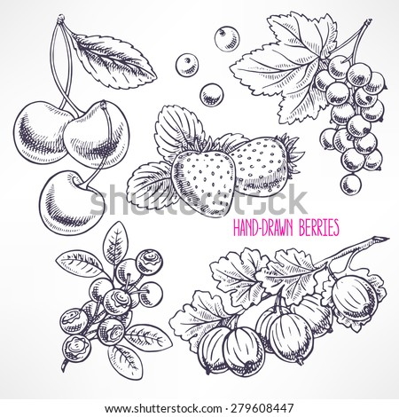 set with different ripe berries and leaves. hand-drawn illustration - stock vector