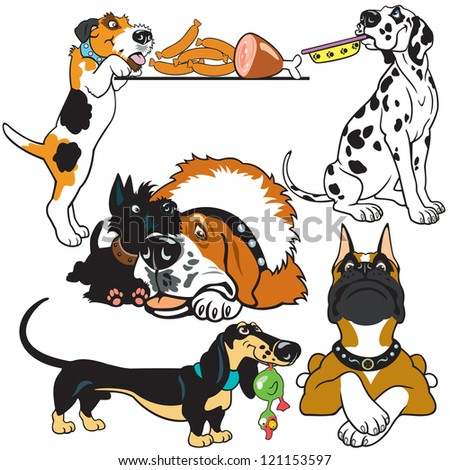 set with dog breeds,cartoon pictures isolated on white background,vector images - stock vector