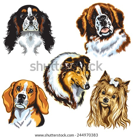 set with dogs heads, difference breeds, images isolated on white - stock vector