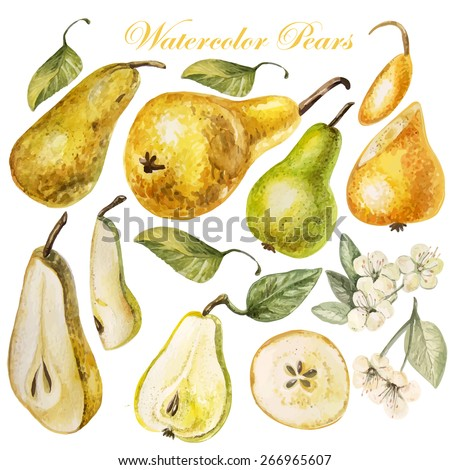 Set with watercolor pears. Vector. - stock vector