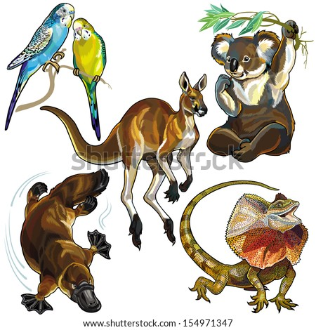 set with wild animals of australia isolated on white background - stock vector