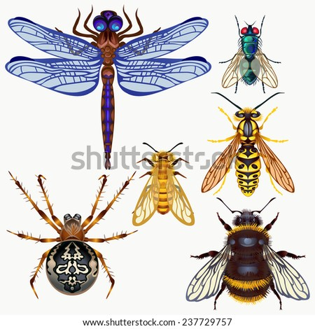 Seth vector insects: spider, dragonfly, fly, wasp, bee, bumble bee. Top view. - stock vector