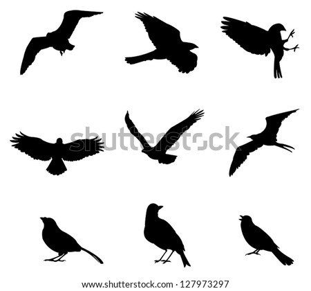 Sets of silhouette birds flying icon, in various species and action expression, create by vector - stock vector