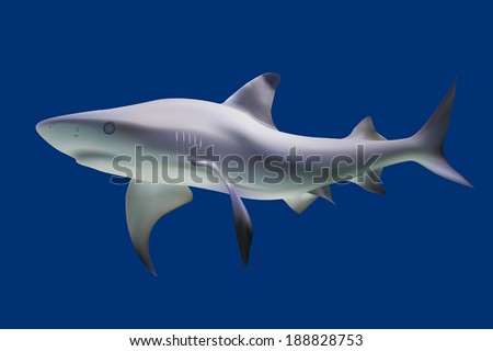 Shark. Vector illustration. Isolated on blue - stock vector