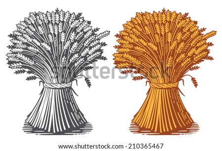 Sheaf of wheat enagraving, vector - stock vector