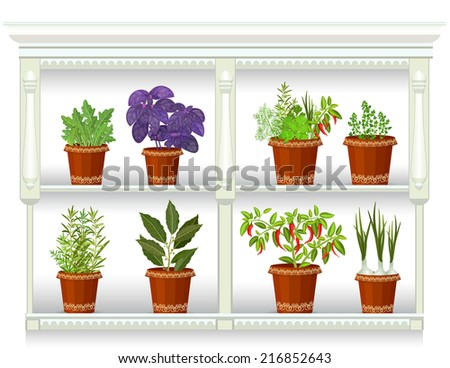 shelfs with collection of herbs in a flowerpots at home - stock vector