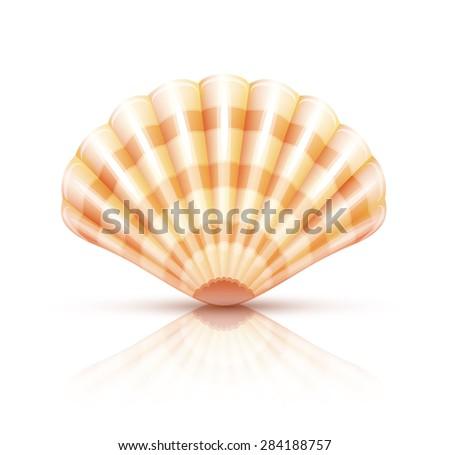 Shellfish seashell. Eps10 vector illustration. Isolated on white background - stock vector
