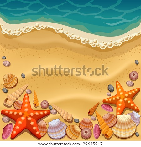 shells on the beach - stock vector