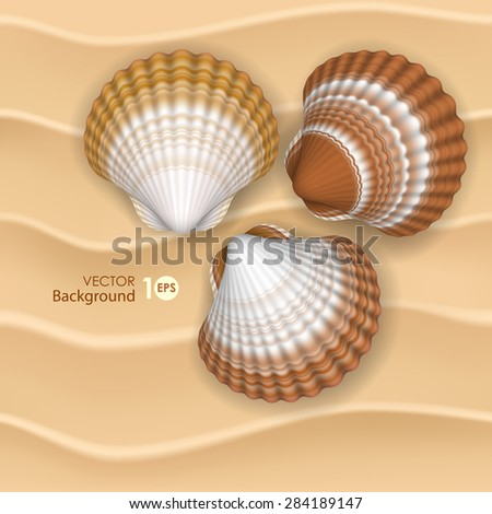 Shells on the sand. Vector eps 10. - stock vector
