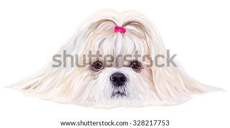 Shih tzu dog portrait in bright white colors - stock vector