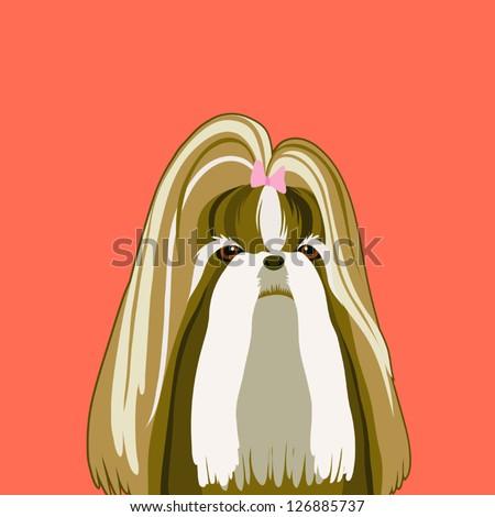 Shih Tzu, The buddy dog - stock vector