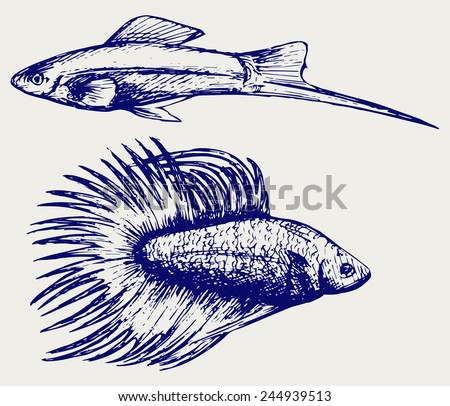 Siamese fighting fish and Xiphophorus hellerii. Doodle style - stock vector