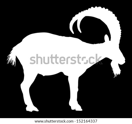 Siberian Ibex Capra sibiric vector silhouette isolated on black background.  - stock vector