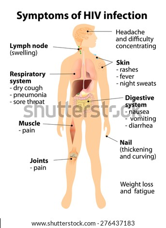Signs and symptoms of HIV infection. Human silhouette with internal organs. Vector illustration - stock vector