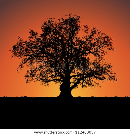 Silhouette of a big mighty oak against sunset. Vector. eps 8 - stock vector