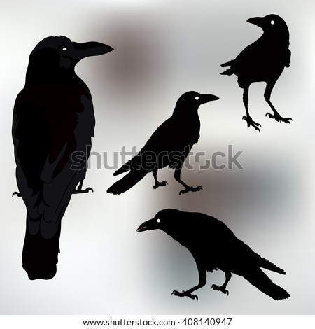 silhouette of a crows in different positions. vector illustration. vector outline of raven. rook silhouettes.  - stock vector