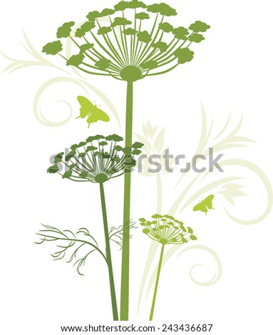 Silhouette of blooming fennel isolated on the white. Vector - stock vector