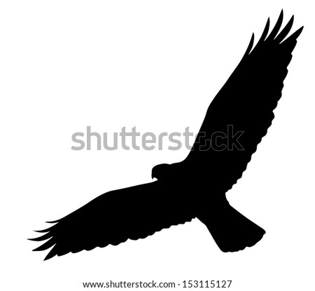 Hawk silhouette Stock Photos  Illustrations  and Vector ArtFlying Hawk Silhouette