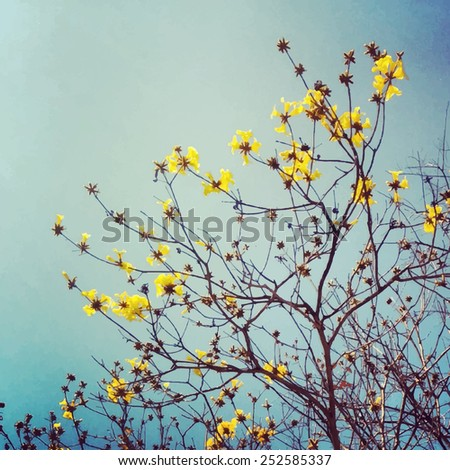 Silhouette of yellow blooming tree branches. Vector background - stock vector