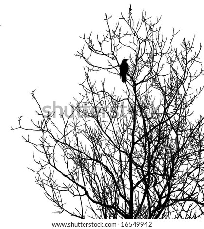 silhouette ravens on tree isolated on white background - stock vector