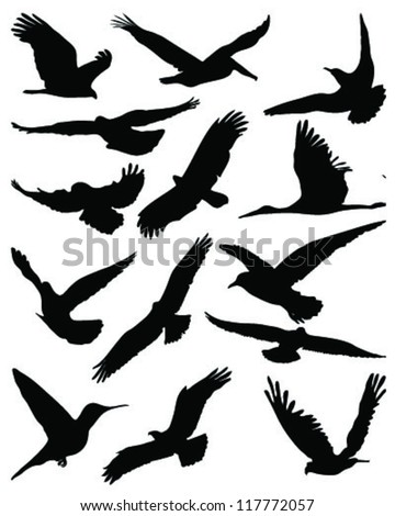 Birds silhouette Stock Photos, Images, & Pictures ...