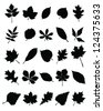 Silhouettes of foliage-vector - stock vector