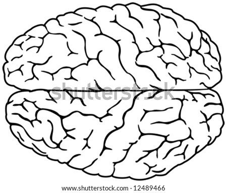 Simple brain drawing - stock vector