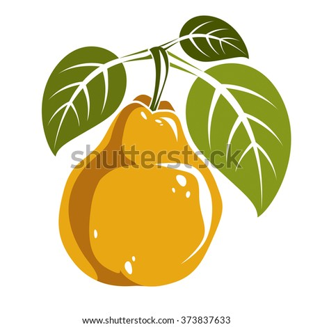 Single yellow simple vector pear with green leaves, ripe sweet fruit illustration. Healthy and organic food, harvest season symbol.  - stock vector