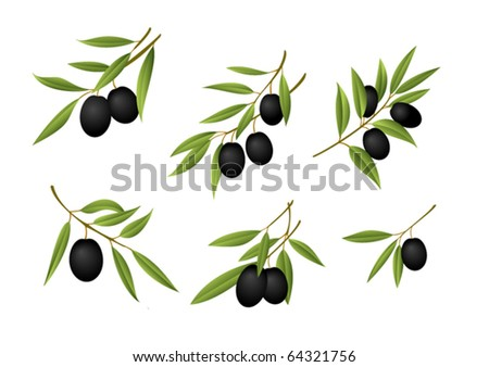 Six olive branches - stock vector