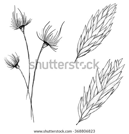 Sketch ear of wheat, flowers, brunch with leavws by hand on an isolated background - stock vector