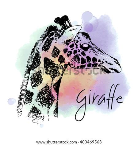 Sketch giraffe. Vector hand drawn illustration. Watercolor background. Hand lettering - stock vector