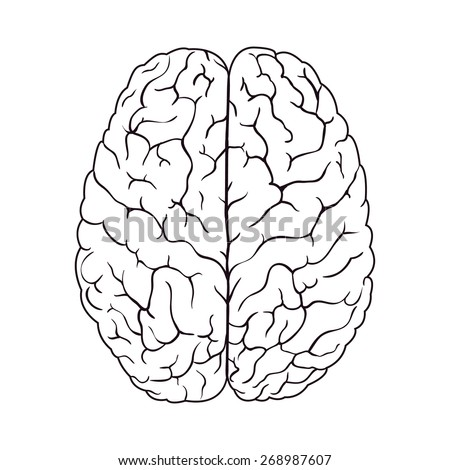brain outline drawing - photo #35