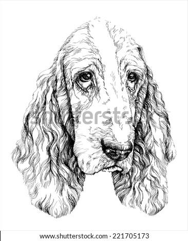 Sketch of funny Basset Hound dog. vector illustration - stock vector