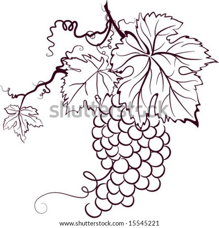 sketch of grapes - stock vector