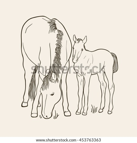 Sketch  of horse and foal on beige background. Art vector illustration - stock vector